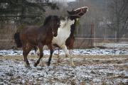 Všehochuť rančová 5