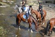 Všehochuť rančová 4