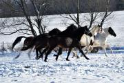 Všehochuť rančová 6