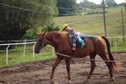Všehochuť rančová 1