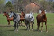 Všehochuť rančová 3