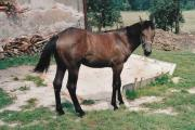 Wendy 2002-11