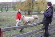 s ovečkama byla sranda