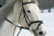 zimní Aminka